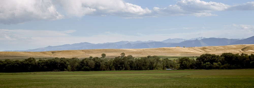 Hayfield Near Ranchester, Sheridan County, Wyoming